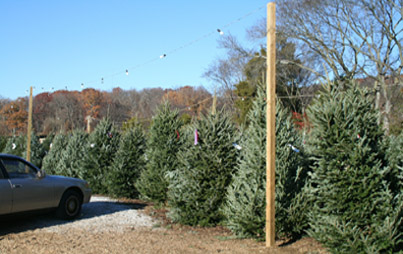 High Country Christmas Tree Retail Lot