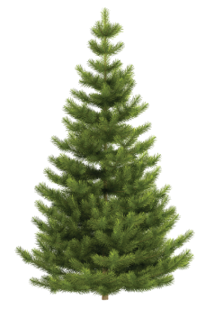 Can You Cut Your Own Christmas Tree In Utah 2020 How and Where to Recycle or Dispose Your Christmas Tree in 2020