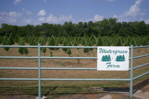 wintergreen christmas tree farm